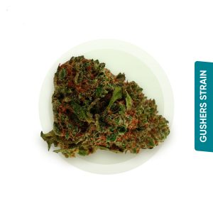 Gushers strain
