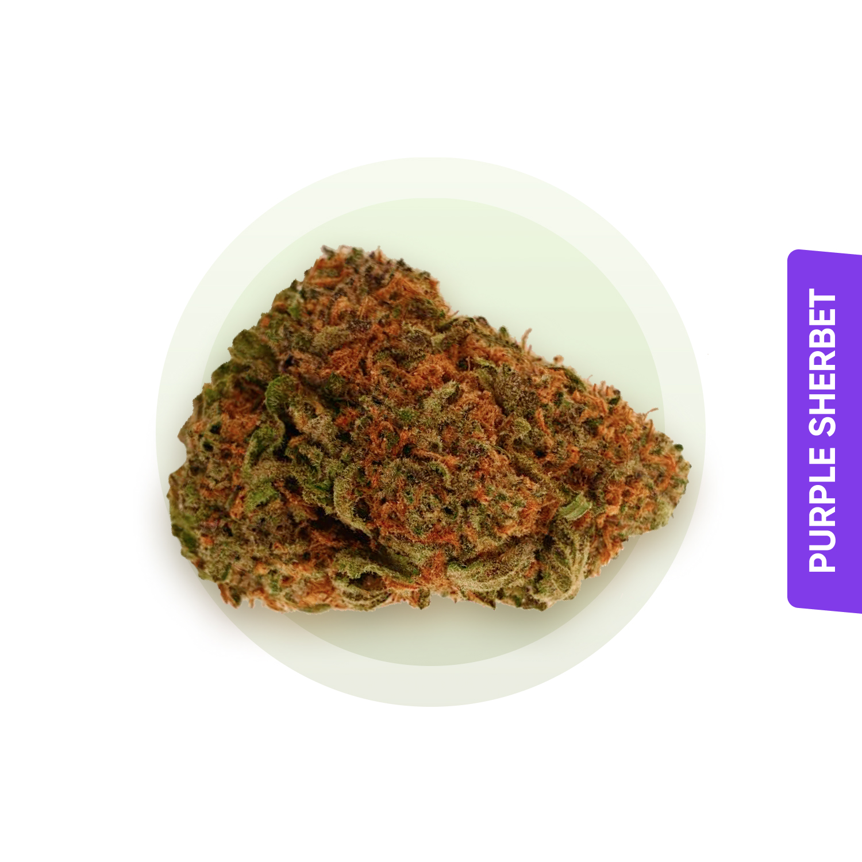 Purple Sherbet strain